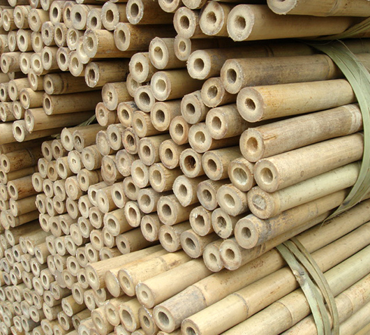 Бамбук для виноградника / питомника