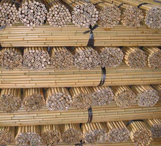Бамбук для садоводства