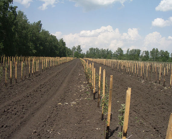 Интенсивное садоводство в России